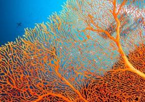 3D printed coral reefs