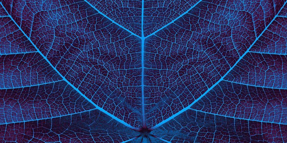 Biomimicry course