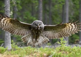 biomimicry, technology, owl wings feathers