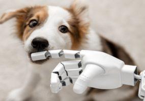 Dog treat AI